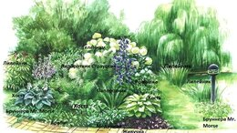 Рассада, саженцы, кустарники, деревья - Клумба № 107,многолетние цветы, 0
