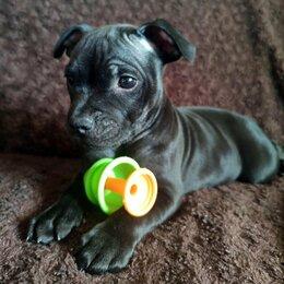 Собаки - Щенки Стаффордширский Бультерьер СТАФФИ, 0