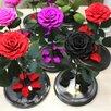 Вечная роза по цене 3990₽ - Цветы, букеты, композиции, фото 3