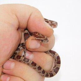Рептилии - Полоз маисовый, 0