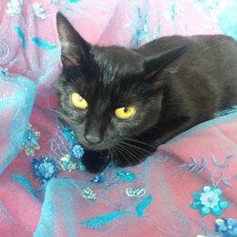 Кошки - Черненький талисманчик хочет  домой, 0