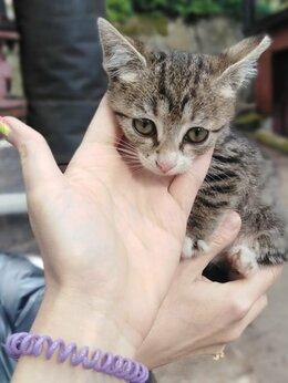 Кошки - Кроха срочно ищет дом, 0