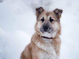 Собаки - Добрая и ласковая Люся ждёт семью, 0