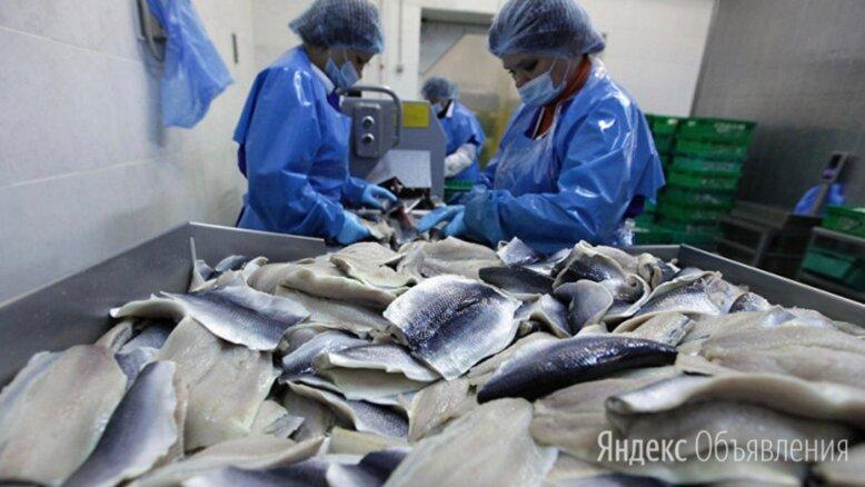 Разнорабочие на рыбное производство (вахта в Московской области) - Разнорабочие, фото 0