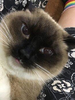 Животные - Потерялась кошка!, 0