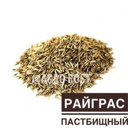 Семена - Райграс пастбищный, 0