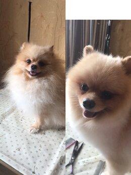 Груминг и уход - Грумин собак, 0