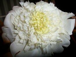 Цветы, букеты, композиции - РЕАЛИСТИЧНЫЕ ЦВЕТЫ ИЗ ФОАМИРАНА, 0