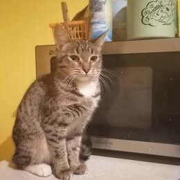Кошки - Молодая кошка в добрые руки, 0