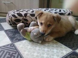 Собаки - Щенки-дворяне в добрые руки, 0