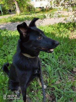 Собаки - Чара ищет хозяев, 0