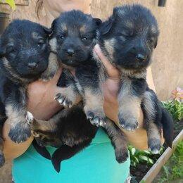Собаки - Щенки мальчик и девочка , 0