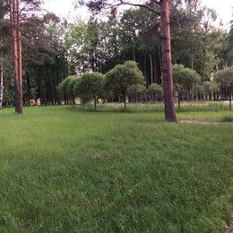 Семена - Семена газонных трав, 0