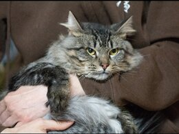 Кошки - Чудесный Феликс ждёт особенную семью , 0