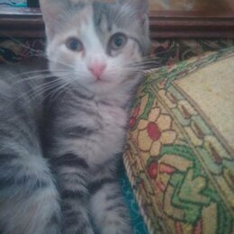 Кошки - Очаровательные котята, 0