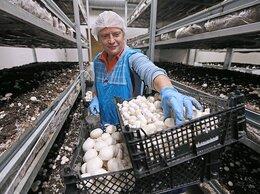 Рабочие - Сборщик грибов на вахту от 15 смен  питание…, 0