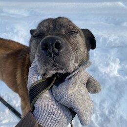 Собаки - Собака в возрасте очень нуждается в хозяине, 0