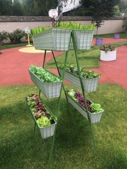 Комнатные растения - Вертикальный огород Найди 6 кашпо, 0