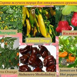 Семена - Семена Острых Сортовых ПЕРЦЕВ для выращивания в открытом грунте, 0