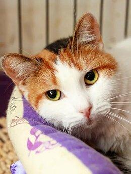 Кошки - Трехцветная Микелла принесет вам удачу и счастье, 0