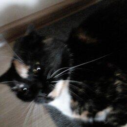 Кошки - Кошки в дар., 0