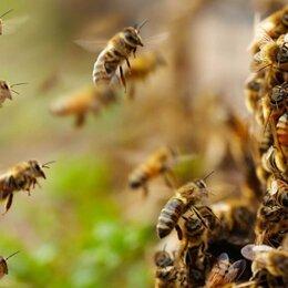 Товары для сельскохозяйственных животных - отводки пчел, 0