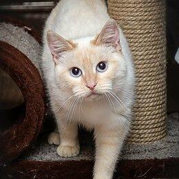 Кошки - Красавица Янтарина, 0