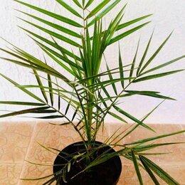 Комнатные растения - Древо жизни, 0