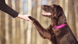 Услуги для животных - Дрессировка собак , 0