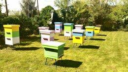 Сельскохозяйственные животные - Пчёлы , аренда пчёл с ульями. Пасека под ключ., 0