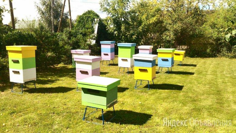 Пчёлы , аренда пчёл с ульями. Пасека под ключ. по цене 6500₽ - Сельскохозяйственные животные и птицы, фото 0