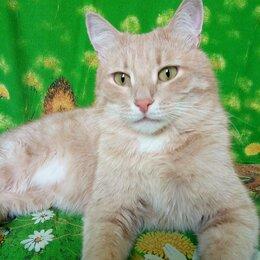 Кошки - Персиковый красавчик ищет ответственную семью!!! , 0