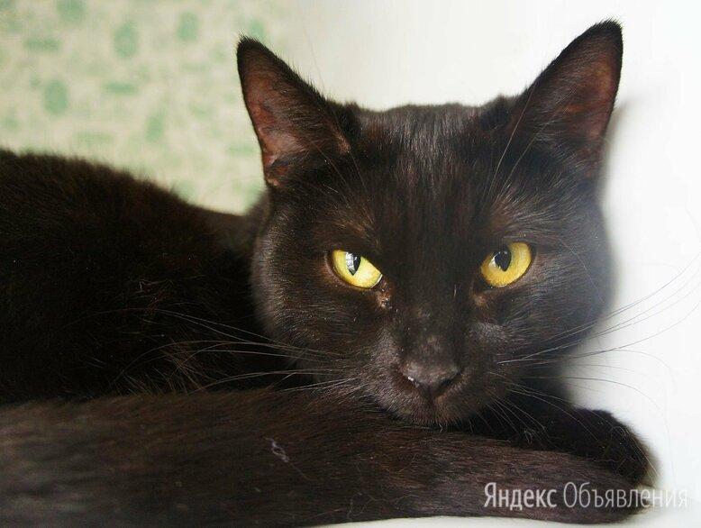Кошечка ищет дом по цене даром - Кошки, фото 0