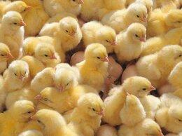Товары для сельскохозяйственных животных - Инкубатор 36 яиц Несушка 220 В автомат поворот…, 0