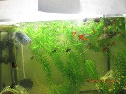 Аквариумы, террариумы, тумбы - аквариум, 0