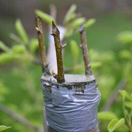 Бытовые услуги - Омоложение и обрезка деревьев, прививка сортовых черенков., 0