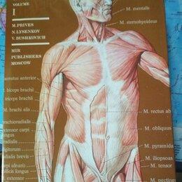 Наука и образование - Human anatomy Человеческая анатомия, 0