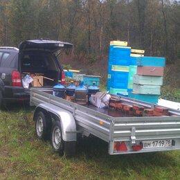 Сельскохозяйственные животные и птицы - Карника пчелы 2022, 0