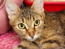 Кошки - Молодая ручная красавица Вайолет, 0