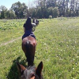 Конный спорт - Конные прогулки, 0