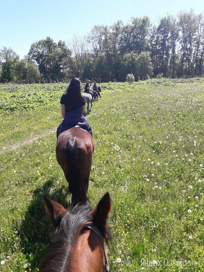 Конные прогулки по цене 1300₽ - Конный спорт, фото 0