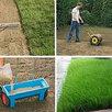 Семена газона по цене даром - Семена, фото 0