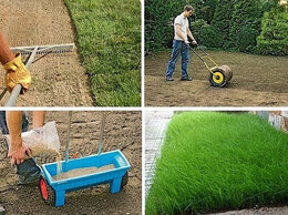 Семена - Семена газона, 0