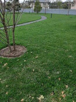 Газоны - Укладка газона, посев газона, озелинение,…, 0