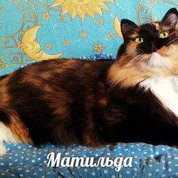 Кошки - Матильда, 0