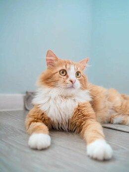 Кошки - Котенок Лева, 0