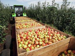 Сельское хозяйство - Продаётся Садовое хозяйство со сквжнами, 0