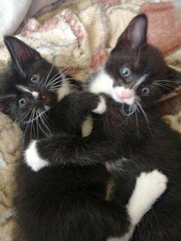 Кошки - Кошки, 0