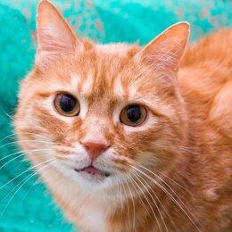 Кошки - Рыжий-рыжий конопатый...красавчик 5 лет ищет дом, помогите коту , 0