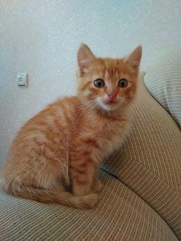 Кошки - Ласковый рыжий мальчик Кузя 2 мес ищет свой дом, 0